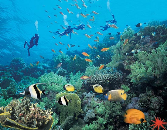 壁纸 海底 海底世界 海洋馆 水族馆 桌面 550_428